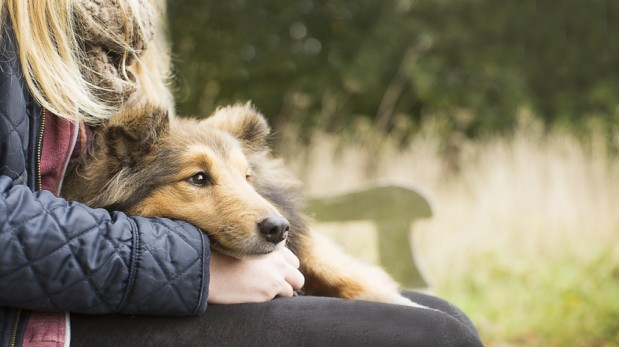 ¿Quieres un perro? Estos son los beneficios de tener uno