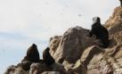 Paracas es el nuevo punto de atención para los turistas