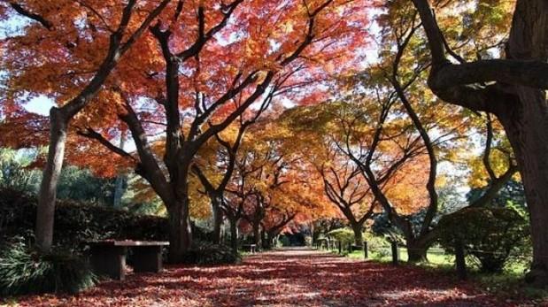 Tokio: la mística de su jardín botánico