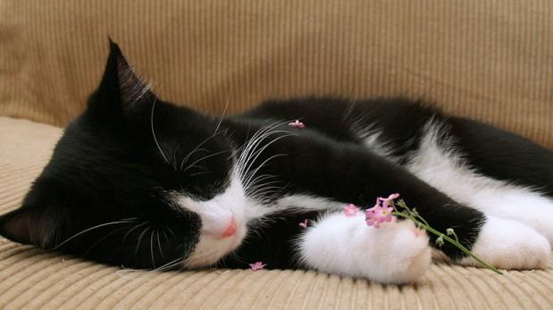 ¿Amante de los gatos? 5 razones para tener uno