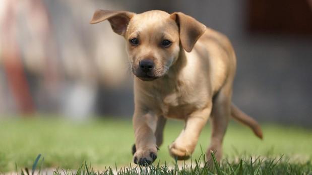 Amigo fiel: Cómo saber si estás lista para tener una mascota