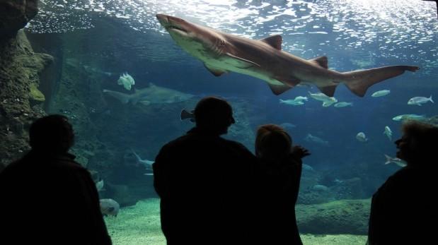 Harvard prueba que piel artificial de tiburón mejora natación