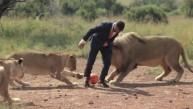 El cautivador video de leones que juegan al fútbol