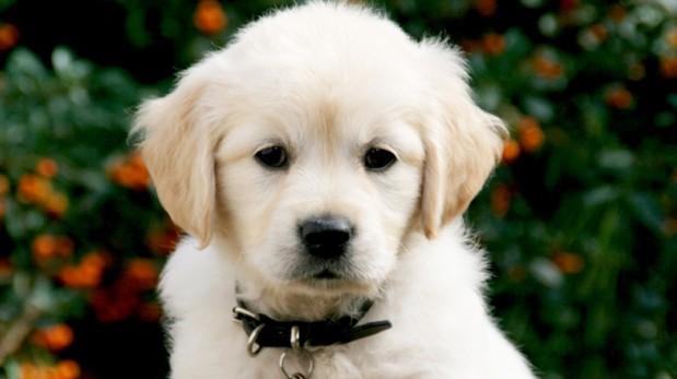 Húmedo otoño: Aprende a cuidar a tus mascotas del frío