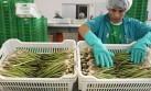 Perú: primer exportador mundial de espárragos, quinua y maca
