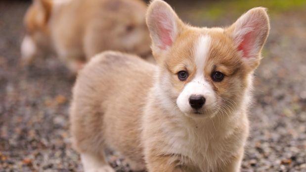 Sentimientos encontrados: ¿Tu mascota es celosa o envidiosa?