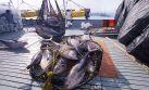 Produce: atún podría impulsar inversiones en el sur del país