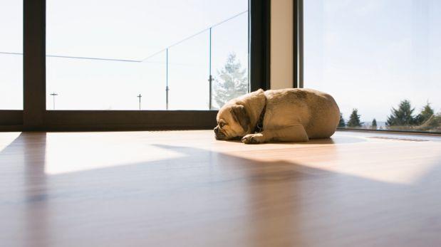 Solos en casa: Tu perro puede sufrir de ansiedad por separación
