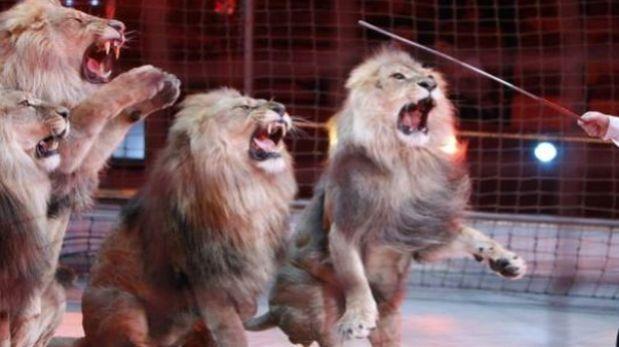León atacó a profesora en plena función de un circo
