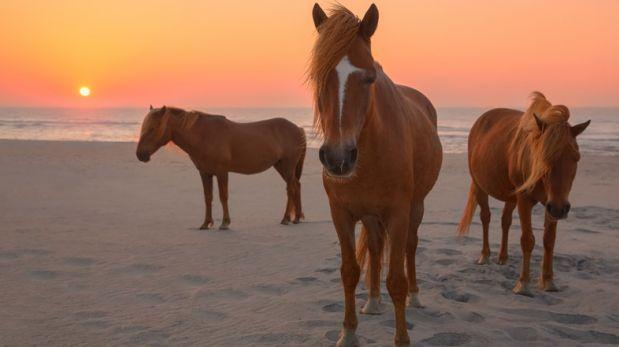 En la isla Assateague podrás ver pasear a caballos salvajes
