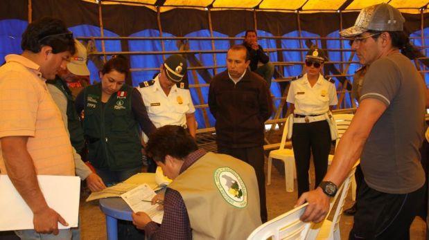 Más leones rescatados de circos: esta vez fue en Huamanga