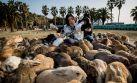 Okunoshima: Una isla en Japón llena de conejos silvestres