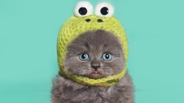 ¿Por qué nos gusta tanto ver gatitos ajenos?