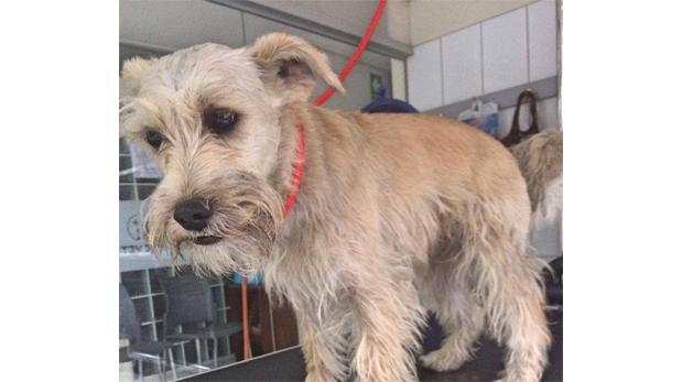 Arca de Noé: Estas mascotas necesitan de tu ayuda
