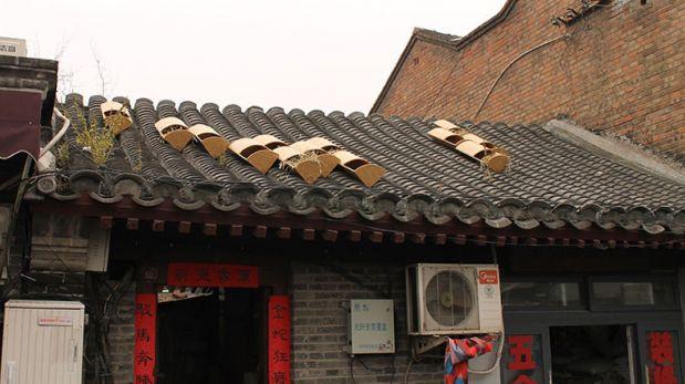 Diseñan casas para gatos callejeros en los tejados