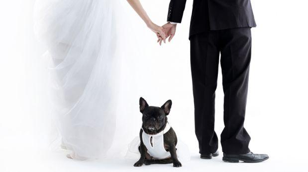 Matrimonio con mascotas: Los míos, los tuyos y los nuestros