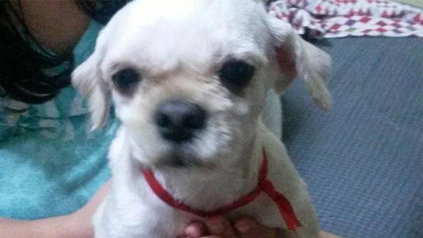Arca de Noé: Estas mascotas necesitan tu ayuda