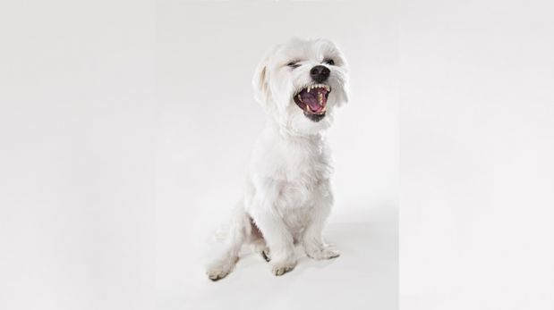 Reconoce los síntomas de la temible rabia en tus mascotas