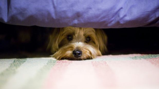 Cómo proteger a tus mascotas de los fuegos artificiales