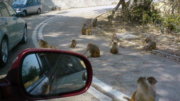 Monkey Hill: Este sorprendente valle está lleno de monos