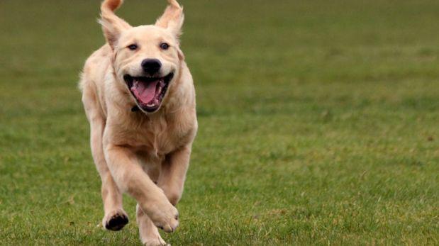 Mira la graciosa participación de este perro en una competencia