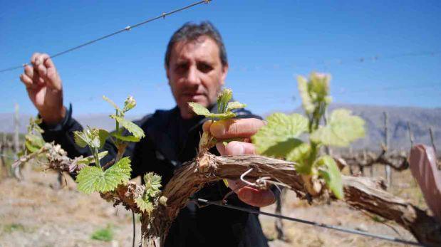 Recorre la otra ruta del vino en estas bodegas en Argentina