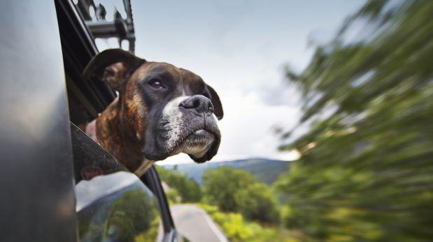¿Viajas con tu perro? Seis consejos que te pueden ser útiles