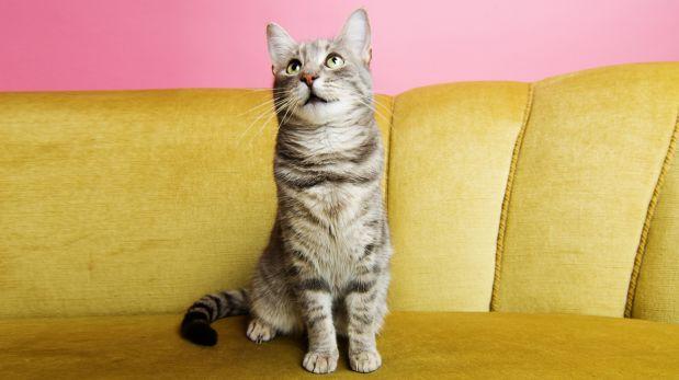 ¿Para quiénes son ideales los gatos?