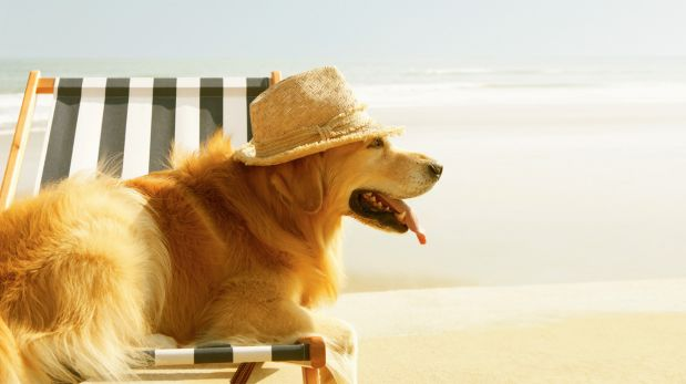 ¿Perros en la playa? Cómo pasar un verano sin riesgos