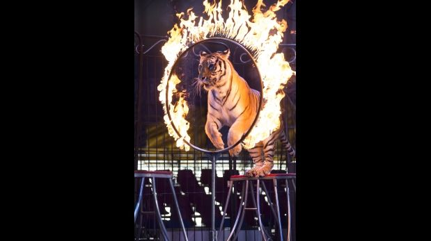 México prohíbe espectáculos con animales silvestres en circos