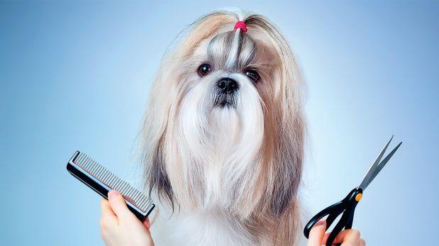 ¿Debo cortarle el pelo a mi perro en verano?
