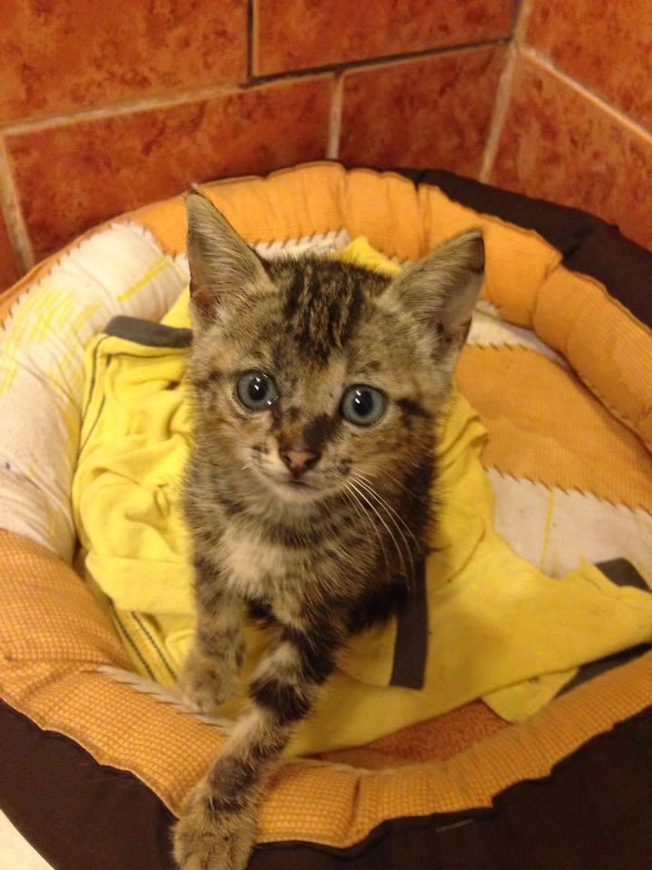 Mascotas: Ayuda a estos perros y gatos a encontrar un hogar