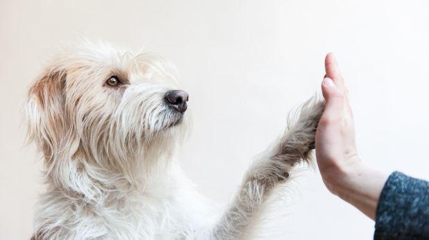 Mascotas: Ayudemos a estos animalitos a encontrar un hogar