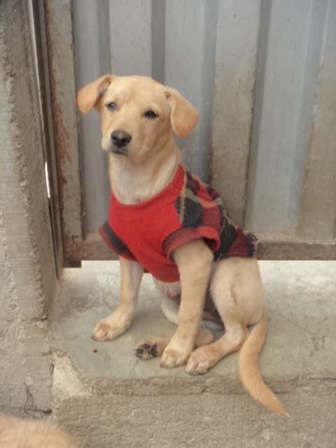 Ayuda a estas mascotas a encontrar un hogar