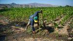 Preparan recuperación del acuífero de Ica y acueductos de Nasca - Noticias de pamela rios