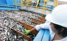 Crecimiento del sector pesquero podría llegar a 70% este año