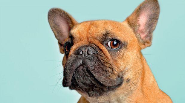 ¿Tienes un perro gruñón? Analiza su situación