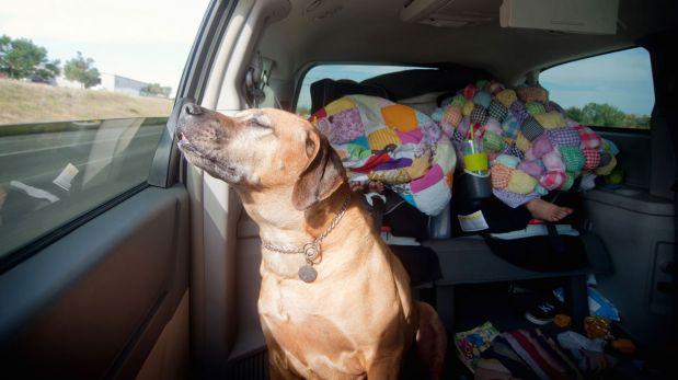 Seis consejos para viajar con tu mascota en un auto