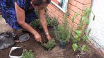 Adulto mayor: La aventura de mantener una chacra en casa - Noticias de borja gonzalez