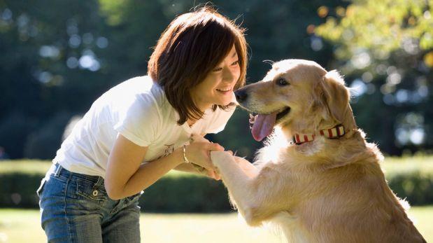 Aprende a educar a tu mascota con estos consejos