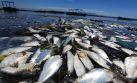 La extraña aparición de peces muertos en una sede olímpica