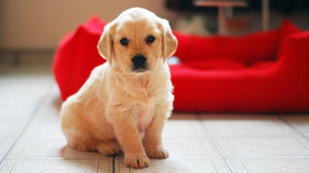 Aprende a cuidar a tu cachorro los primeros días
