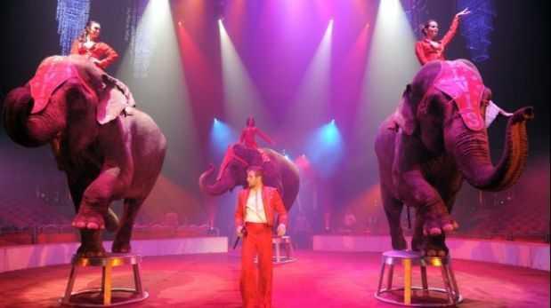 México: dueños de circos evalúan sacrificar a sus animales