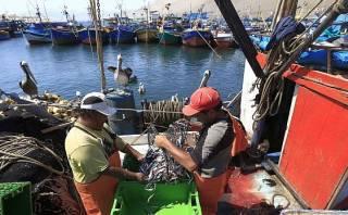 Pesqueras creen que El Niño no impactará en la anchoveta