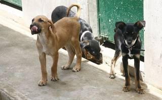 Organizan cruzada por animales afectados por huaicos en Chosica