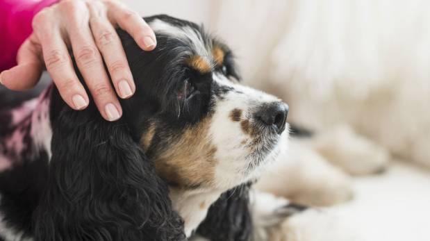 Aprende a cuidar a tu mascota cuando envejece