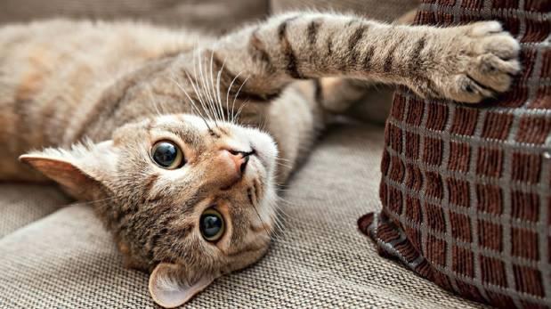 Conoce la forma en que los gatos marcan su territorio