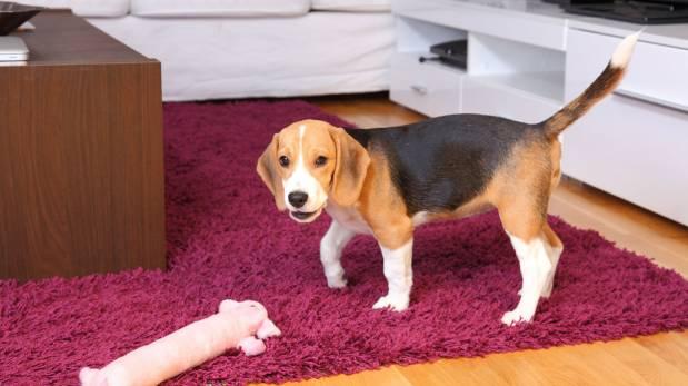 Aprende a vivir con tus mascotas en espacios pequeños