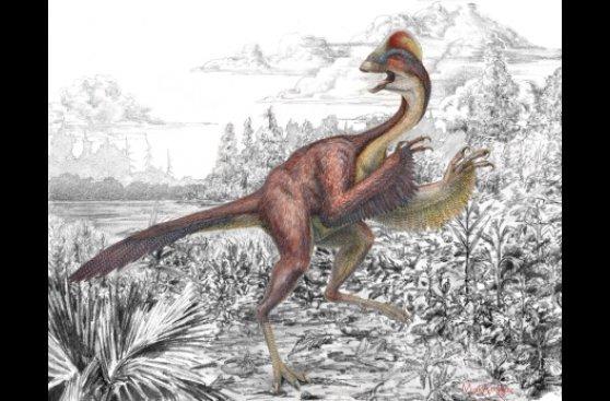 Las 10 nuevas especies más sorprendentes descubiertas en 2014