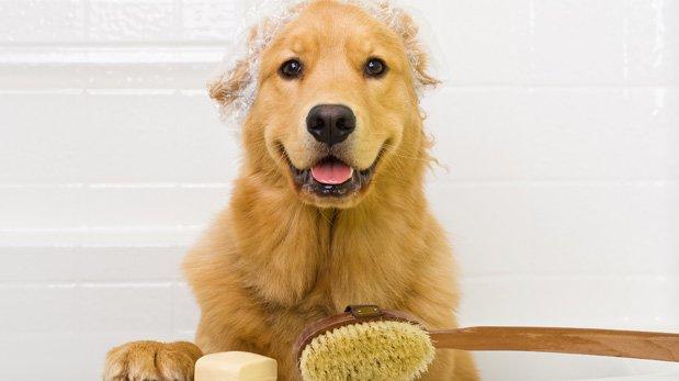 Artículos del hogar que le pueden hacer daño a tu mascota
